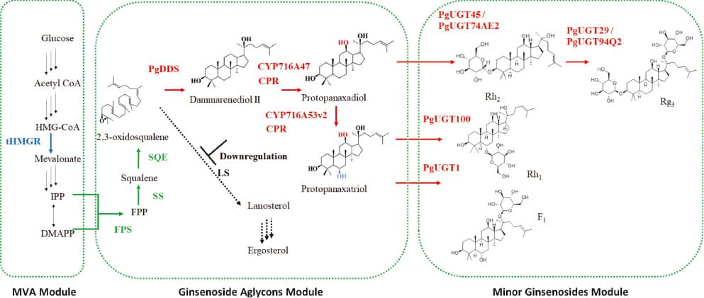 Microorganisms and Their Enzymes