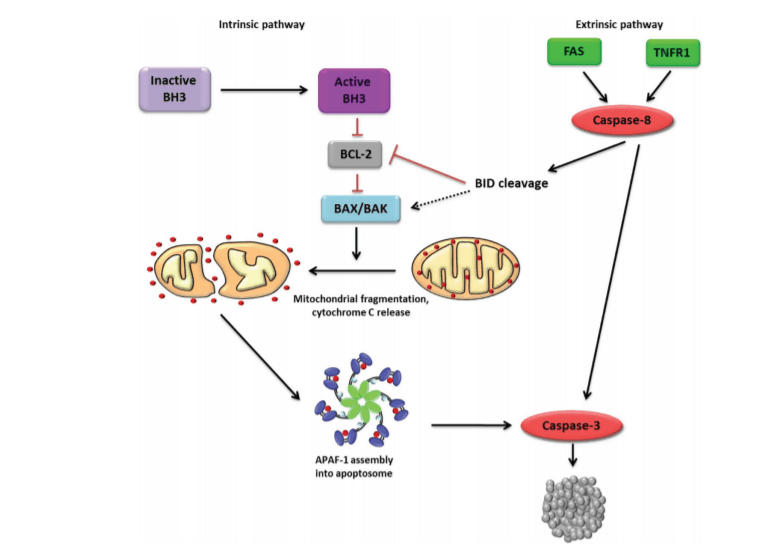 Enhancing Chemotherapy by RNA